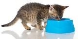 Junge Katzen ausgewogen füttern